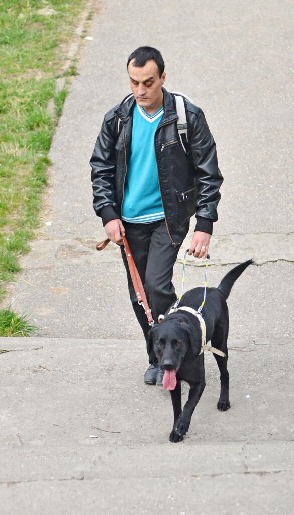 Adrian working with Guide Dog Max, walking up steps