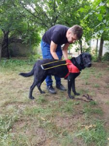 Silviu learning to put the guide dog harness on his dog Basil